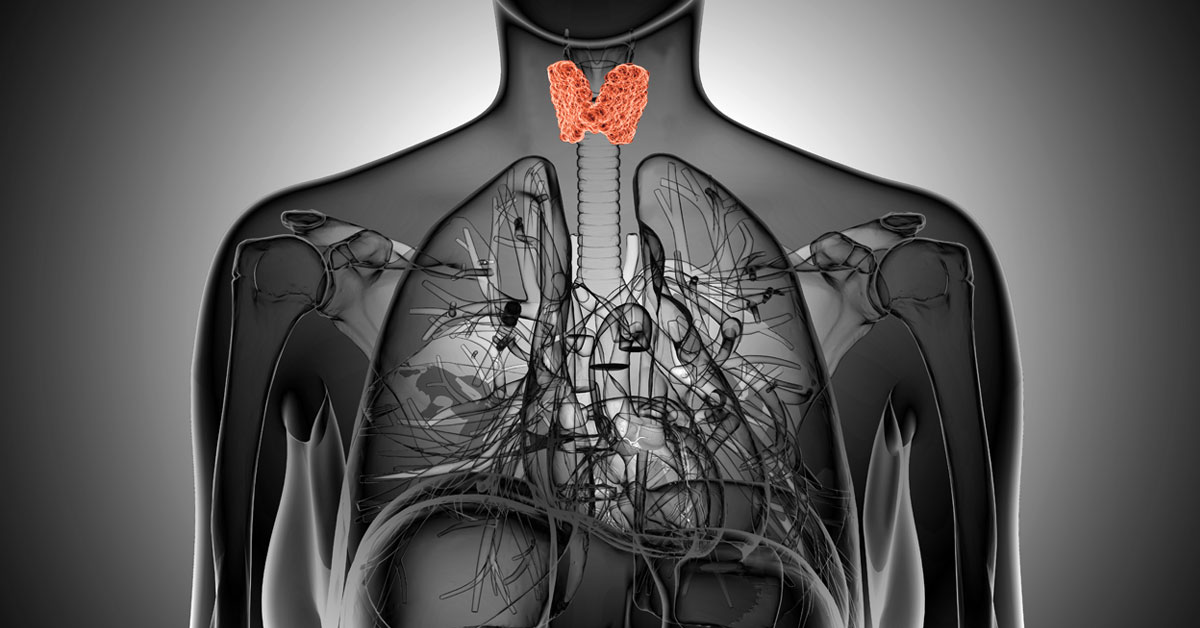 Thyroid 101 and How to Fight Imbalances with Proper Nutrition